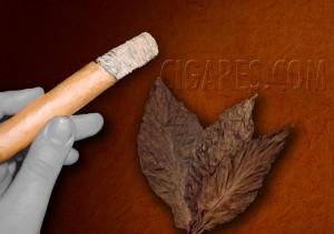 Tout savoir sur la cendre du cigare