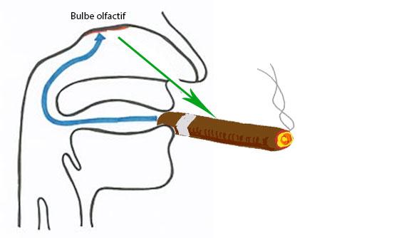 degustation cigare