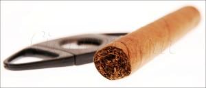 connaissances sur le cigare