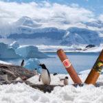 Conserver les cigares au réfrigérateur
