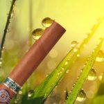 Importance de l'humidité pour la conservation des cigares