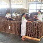 tabac cigare fermentation