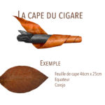 cape du cigare