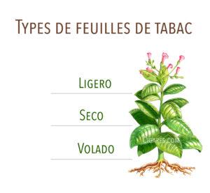 types de feuilles de tabac : seco, volado, ligero
